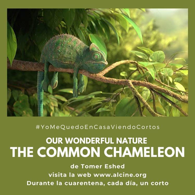"""""""Nuestra maravillosa naturaleza"""", corto breve, divertido y técnicamente impecable #YoMeQuedoEnCasaViendoCortos"""